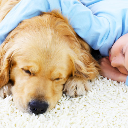 Pet Stain & Odour Treatment